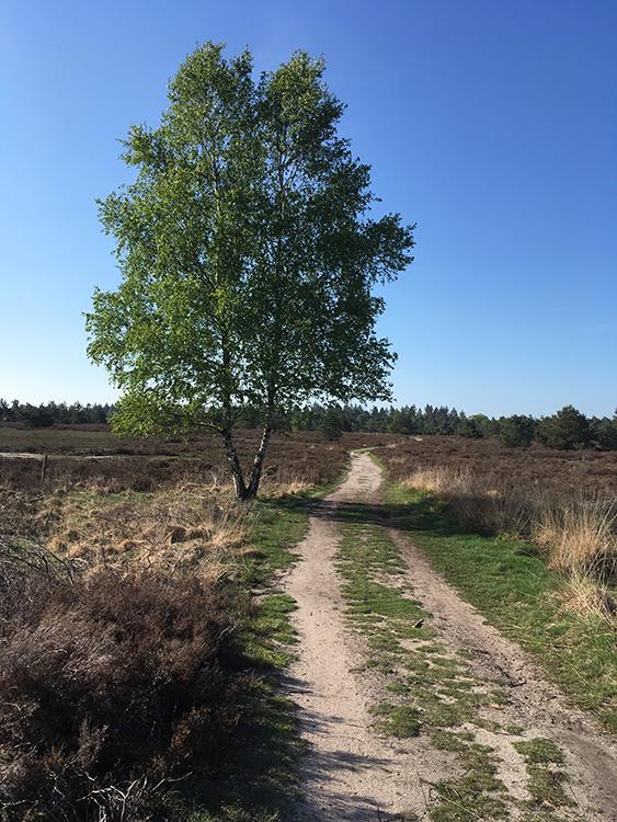 wandeling maken over de sallandse heuvelrug