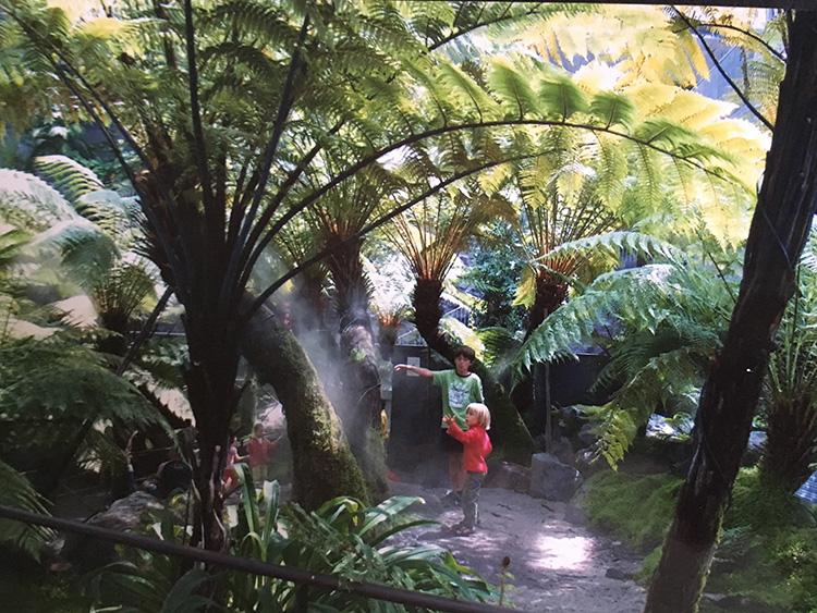 vulcania planten