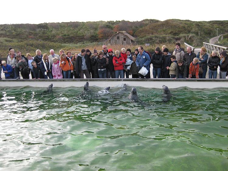 zeehonden voeren bij ecomare