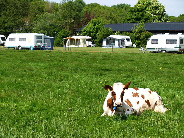 Agro-Camping Ormsby Field